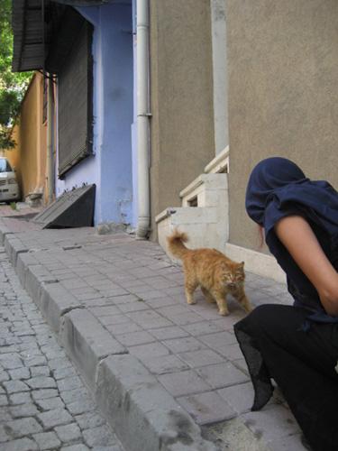 gatito turco 1
