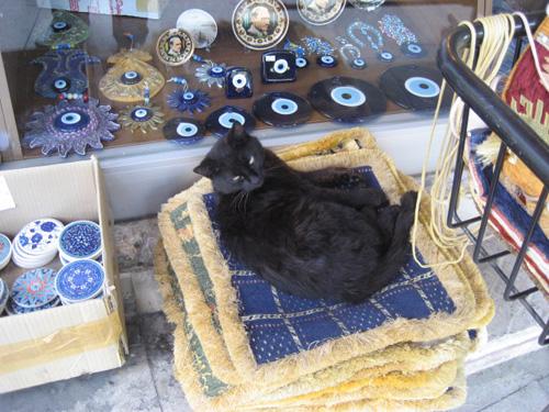gatito turco 2