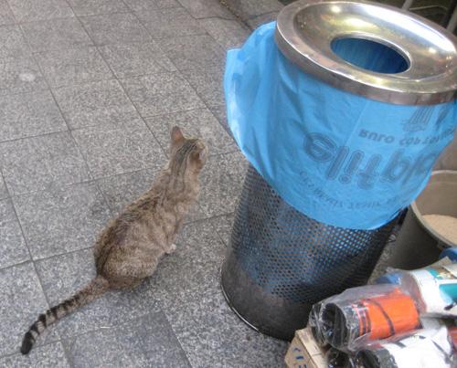 gatito turco 3