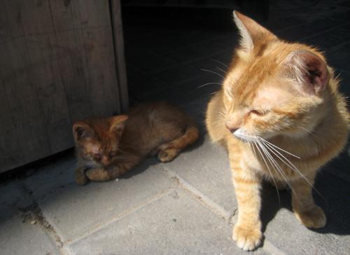 gatito en tel aviv