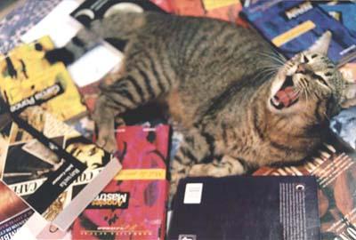 gatito lee