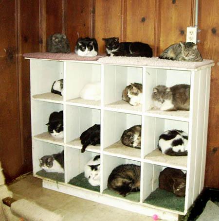 organizador para gatos