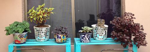plantits